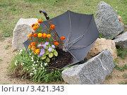 Купить «Зонтик, наполненный землей, с растущими цветами», фото № 3421343, снято 18 сентября 2011 г. (c) Ольга Вьюшкова / Фотобанк Лори
