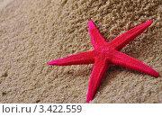 Морская звезда на песке. Стоковое фото, фотограф Галина Власова / Фотобанк Лори