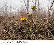Первая зелень. Стоковое фото, фотограф Цыганков Григорий Николаевич / Фотобанк Лори