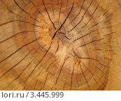 Текстура. Стоковое фото, фотограф Руслан Кузуб / Фотобанк Лори