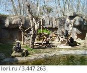 Вольер с шимпанзе. Стоковое фото, фотограф Екатерина Ильина / Фотобанк Лори