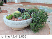 Садовая композиция в вазе. Стоковое фото, фотограф Оксана Sk / Фотобанк Лори