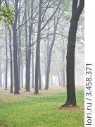 Купить «Туманный парк», эксклюзивное фото № 3458371, снято 7 августа 2010 г. (c) Журавлев Андрей / Фотобанк Лори