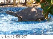 Купить «Скульптура черепахи», эксклюзивное фото № 3458607, снято 19 августа 2011 г. (c) Журавлев Андрей / Фотобанк Лори