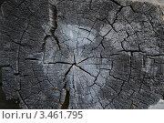 Фактура дерева. Стоковое фото, фотограф Сайфутдинов Ильгиз / Фотобанк Лори
