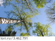 Небо, деревья. Стоковое фото, фотограф Евгения Плешакова / Фотобанк Лори