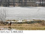 Собака на пруду. Стоковое фото, фотограф Наталия Журова / Фотобанк Лори