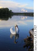 Белый лебедь на пруду на закате. Стоковое фото, фотограф Юрий Кузовлев / Фотобанк Лори