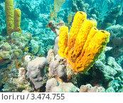 Купить «Участок морского дна с губками», фото № 3474755, снято 9 декабря 2011 г. (c) Сергей Дубров / Фотобанк Лори