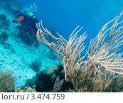 Купить «Подводный пейзаж с дайвером», фото № 3474759, снято 9 декабря 2011 г. (c) Сергей Дубров / Фотобанк Лори