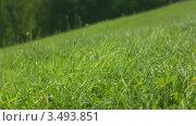 Летняя поляна. Стоковое видео, видеограф Павел Меняйло / Фотобанк Лори