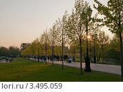 Аллея с молодыми зелеными деревьями на закате. Стоковое фото, фотограф Сергей Родин / Фотобанк Лори