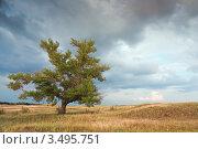 Старый тополь в степи. Стоковое фото, фотограф Хромушин Тарас / Фотобанк Лори