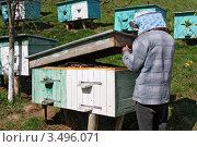 Купить «Пасечник у улья», фото № 3496071, снято 26 апреля 2012 г. (c) Швадчак Василий / Фотобанк Лори