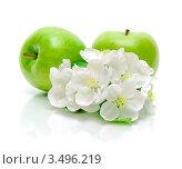 Купить «Зеленые яблоки и яблоневые цветы», фото № 3496219, снято 6 мая 2012 г. (c) Ласточкин Евгений / Фотобанк Лори