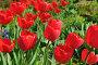 Тюльпаны, эксклюзивное фото № 3506683, снято 8 мая 2012 г. (c) Юрий Морозов / Фотобанк Лори