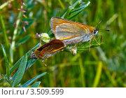 Бабочки (спаривание) Стоковое фото, фотограф Александр Казаков / Фотобанк Лори