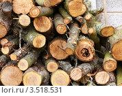 Дрова из старых яблонь. Стоковое фото, фотограф Наталья Громова / Фотобанк Лори