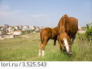 Лошади. Стоковое фото, фотограф Кирилл Багрий / Фотобанк Лори
