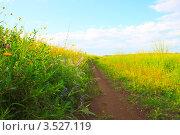 Уходящая в даль тропинка по среди высокой травы и цветов. Стоковое фото, фотограф Петр Карташов / Фотобанк Лори