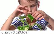 Купить «Мальчик с растением в горшке на белом фоне», видеоролик № 3529639, снято 5 ноября 2008 г. (c) Losevsky Pavel / Фотобанк Лори