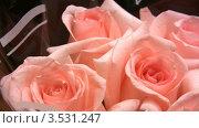 Купить «Розовые розы», видеоролик № 3531247, снято 30 декабря 2008 г. (c) Losevsky Pavel / Фотобанк Лори