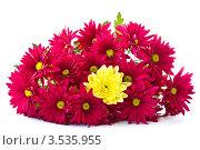 Букет из красных хризантем с желтой хризантемой внутри. Стоковое фото, фотограф Peredniankina / Фотобанк Лори