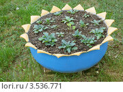 Купить «Использование старой покрышки», фото № 3536771, снято 22 мая 2012 г. (c) Александр Романов / Фотобанк Лори