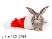 Купить «Серый кролик в шапке Санта Клауса», фото № 3546091, снято 26 мая 2012 г. (c) Чирцова Наталья / Фотобанк Лори