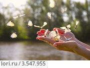 Из женских рук вылетает много белых бабочек. Стоковое фото, фотограф Петр Карташов / Фотобанк Лори