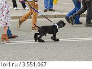 Купить «На Марше миллионов 6 мая  2012 года», эксклюзивное фото № 3551067, снято 6 мая 2012 г. (c) Алёшина Оксана / Фотобанк Лори