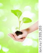 Зеленый росток в руке. Стоковое фото, фотограф Валерия Лузина / Фотобанк Лори