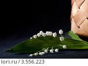 Купить «Веточка ландыша», фото № 3556223, снято 30 мая 2012 г. (c) Ольга Денисова / Фотобанк Лори