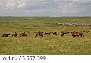 Пейзаж с лошадьми и фермой. Стоковое фото, фотограф Вячеслав Зеленин / Фотобанк Лори