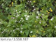 Купить «Органическое земледелие - сидераты на грядке», эксклюзивное фото № 3558187, снято 1 июня 2011 г. (c) Короленко Елена / Фотобанк Лори