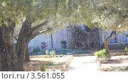 Купить «Гефсиманский сад в Иерусалиме», видеоролик № 3561055, снято 20 января 2012 г. (c) Павел С. / Фотобанк Лори