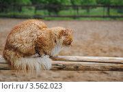 Спящий рыжий кот. Стоковое фото, фотограф Евгения Плешакова / Фотобанк Лори