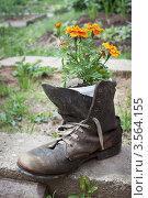 Купить «Старый ботинок в садовом дизайне», фото № 3564155, снято 1 июня 2012 г. (c) Александр Романов / Фотобанк Лори