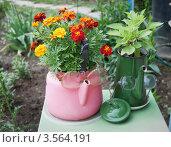 Купить «Старая посуда использована в садовом дизайне», фото № 3564191, снято 1 июня 2012 г. (c) Александр Романов / Фотобанк Лори