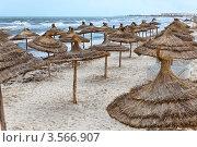 Купить «Песчаный пляж с зонтиками из пальмовых листьев», фото № 3566907, снято 1 мая 2012 г. (c) Кекяляйнен Андрей / Фотобанк Лори