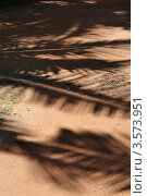 Тени пальм на песке. Стоковое фото, фотограф Галина Власова / Фотобанк Лори