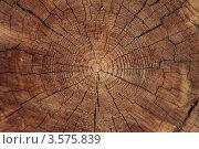 Срез дерева. Стоковое фото, фотограф Светлана Сарапкина / Фотобанк Лори