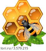 Купить «Пчела на медовых сотах», иллюстрация № 3579215 (c) Марина Львова / Фотобанк Лори