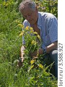 Купить «Заготовка лекарственных трав», эксклюзивное фото № 3588927, снято 11 июня 2011 г. (c) Короленко Елена / Фотобанк Лори
