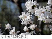 Цветы. Стоковое фото, фотограф Ковалева Екатерина / Фотобанк Лори