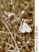 Бабочка на цветке. Стоковое фото, фотограф Ворошилова Анна / Фотобанк Лори