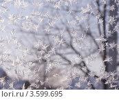 Купить «Стекло с морозными узорами», фото № 3599695, снято 6 июля 2020 г. (c) Анна Павлова / Фотобанк Лори