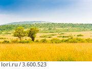 Купить «Саванна. Пейзаж. Кения», фото № 3600523, снято 9 июня 2012 г. (c) Екатерина Овсянникова / Фотобанк Лори