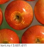Купить «Спелые красные яблоки», фото № 3601611, снято 20 июня 2019 г. (c) Василий  Гелевачук / Фотобанк Лори
