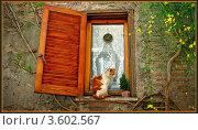 Солнечный Кот.Окно.Рыжий. Стоковое фото, фотограф Калятина Наталья / Фотобанк Лори